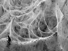 Natural Structures, Natural Forms, Biomimicry Architecture, Public Architecture, Architecture Models, Parametric Design, Mirror Spider, Habitat Collectif, Modern Art