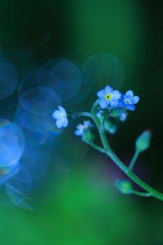 Faint whisper of Spring