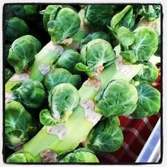 Brussels sprouts from Iacopi Farm