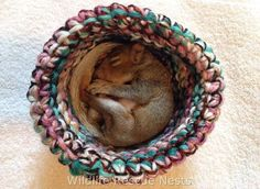 We already know that crafting is great for your mental health, but it turns out it can also be great for helping out orphaned or injured animals. Wildlife Rescue Nests - Crochet and Knit - Check out their Facebook Page: https://www.facebook.com/wildliferescuenests/