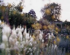 Untitled 1, Garden - by Mike Perry