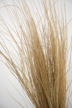 9.99 SALE PRICE! Preserved Natural Bright Tall Grass. A wonderful grass for floral designers. It is very pliable so you can use it to wrap around vases and b...