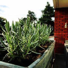 New Homes, Plants, Plant, Planets