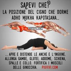 Yoga Nidra, Vinyasa Yoga, Yoga Sequences, Yoga Poses, Yin Yoga, Yoga Meditation, Iyengar Yoga, Ashtanga Yoga, Hata Yoga