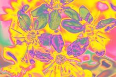 "Saatchi Art Artist Nilüfer ZENGİN; Photography, ""Flower11"" #art"