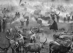 Sebastiao Salgado, Dinka Cattle Camp, Southern Sudan, 2006