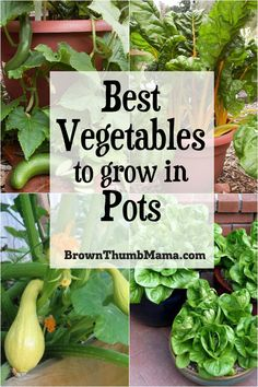 are the 5 best vegetables to grow in containers. You can grow a garden, even in the smallest spaces!These are the 5 best vegetables to grow in containers. You can grow a garden, even in the smallest spaces! Growing Vegetables In Containers, Container Gardening Vegetables, Vegetables Garden, Succulent Containers, Growing Veggies, Container Flowers, Container Plants, Small Vegetable Gardens, Home Vegetable Garden