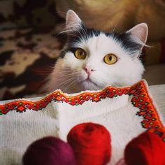 Кота много не бывает  #goodmorning #catboy #cat #muzzle #nose #pussy #sun #sunshine #вышивкакрестом #sumy #sumygram #catstagram #вышивка #animals #lovers  #amazing #myday #joy #jeremy #котэ #кот #мордаха #пухнастик #утро #diy #diycrafts #сумы #выходной #мими #cute