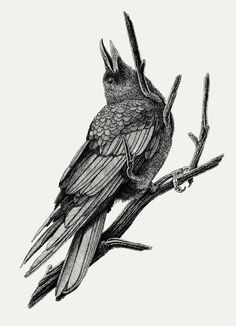"""""""There is wisdom in a raven's head."""""""