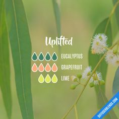 Uplifted - Essential Oil Diffuser Blend