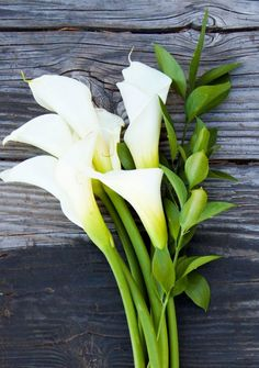 White Calla Lillies - Lilies are one of my favorite flowers. :) (Roses are the other.)