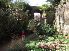 Belsay, Old Quarry Gardens.