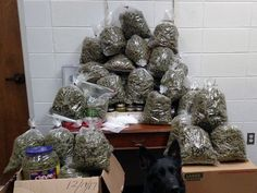 More than 60 pounds of pot seized Dec. 19, 2017, Grandparents planned to give the pot to their family for christmas! Also - a photobombing dog!