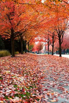 seattle fall colors | Where to Enjoy Spectacular Seattle Fall Colors