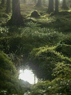 Landscaping Forest Earth Ideas - Landscaping Tips - Nature Narnia, Mother Earth, Mother Nature, Nature Aesthetic, Pretty Pictures, Nature Photography, Levitation Photography, Exposure Photography, Winter Photography