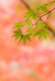 淡紅ひろがる by yukio.s, via Flickr