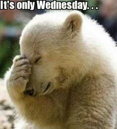 Its only Wednesday quotes quote days of the week wednesday hump day wednesday quotes happy wednesday wednesday morning Wednesday Hump Day, Wednesday Humor, Happy Thursday Morning, Friday Funnies, Tuesday, Funny Quotes, Funny Memes, Hilarious, Funny Cartoons