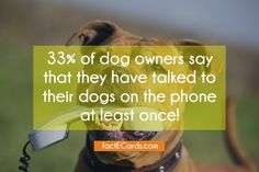 33% of dog owners say that they have talked to their dogs on the phone at least once! - http://factecards.com/33-dog-owners-say-have/