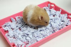 How to Make Hamster Bedding Similar to Carefresh: 6 Steps