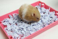 How to Make Hamster Bedding Similar to Carefresh: 6 Steps