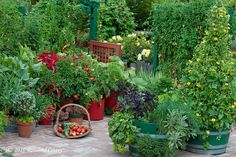 This woman, Rosalind Creasy, has such talent! I don't believe I have seen such gorgeous landscaping and its edible!