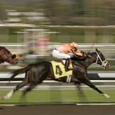 Does Horse Racing Deserve Your Support? What do you think?