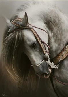 Horse  Beautiful!
