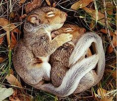 Sleep wel!