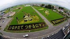 Resultado de imagem para CAMPOS DE ARROZ, COLORIDOS NO JAPÃO