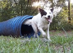How to Design a Backyard Playground for Dogs thumbnail