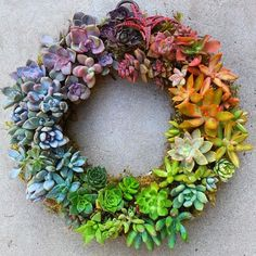 ❤️ Isn't this rainbow succulent wreath the coolest thing ever??? #thevibetown #goodvibes #succulents #rainbow #gardening #unique #creative #dyi #handmade #plants #decor #interiordesign #inspiration #homedecor #plantdecor