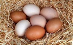 How to Raise Chickens and Collect Delicious Eggs