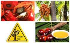 Dossier spécial : tout ce qu'il faut savoir sur l'huile de palme !