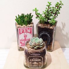 Great Valentine's Day gift, they'll last way longer than flowers! Succulents and cacti in reclaimed bottles by @reusefirst
