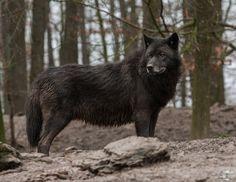 Boss is watching, again. by Blackwolf-Kuzoku on DeviantArt