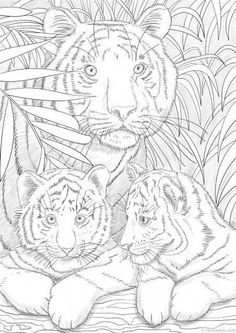 intricate cat coloring pages for adults | tiger coloring ...