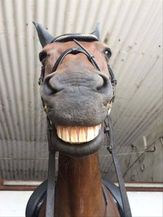 Funny animals of the week - 3 February funny animal, best cute animal images, cute animal photo Funny Horse Pictures, Funny Horses, Cute Horses, Pretty Horses, Horse Love, Beautiful Horses, Animals Beautiful, Humorous Pictures, Beautiful Cats