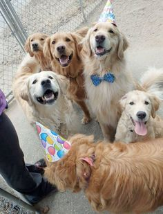 10 Of The Cutest Pictures Of Birthday Dogs You'll Ever See