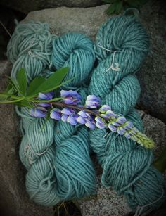 Lupine dyed yarns