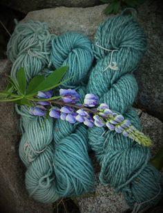 Lupine dyed yarns