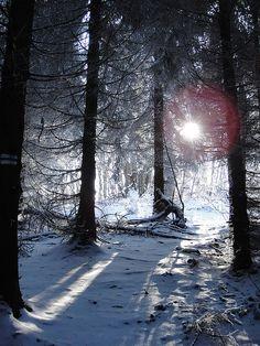 Winter in Poland  Bieszczady Mountains  Poland/Slovakia Border