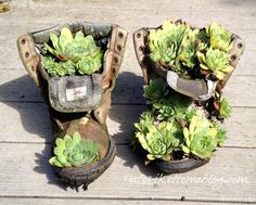 How to Plant Hens and Chicks In a Boot | Feels Like Home Blog™