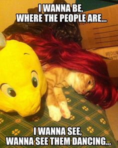 Ariel cat!