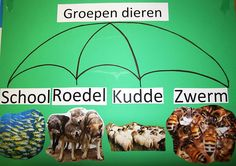 Dieren in groepen School Info, Safari, Projects, Animals, Languages, Spelling, Book, Africa, Log Projects