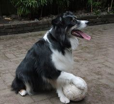 Matty, holding the soccer ball | Flickr - Photo Sharing!