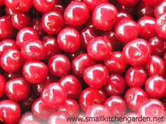 Fresh sour cherries in July http://www.smallkitchengarden.net/wordless-wednesday/sour-cherries-for-wordless-wednesday