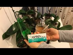 Orchid care, fungal disease and treatment. Orchid care – Famous Last Words House Plants Decor, Plant Decor, Succulent Terrarium, Succulents Garden, Indoor Flowering Plants, Growing Orchids, Growing Gardens, Plant Cuttings, Big Garden