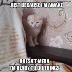 18 Funny and clean animal memes! Funny and Clean Animal memes. Here are some of the funniest animal memes on the net! Funny Animal Jokes, Funny Cat Memes, Really Funny Memes, Cute Funny Animals, Funny Animal Pictures, Cute Baby Animals, Funny Cute, Funny Images, Funny Humor