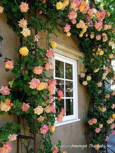 I love a rose trellis