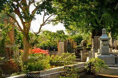 Yanaka cemetery - 20 Free things to do in Tokyo